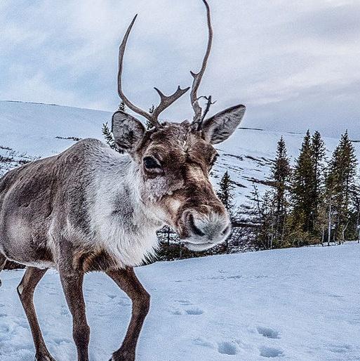 eight fictional reindeer are Dasher, Dancer, Prancer, Vixen, Cupid