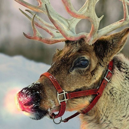 Rudolph is usually depicted as the ninth and youngest of Santa